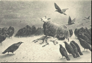 Picture of a sheep standing over her slain lamb while the vultures gather around